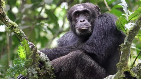 Divlji Kongo
