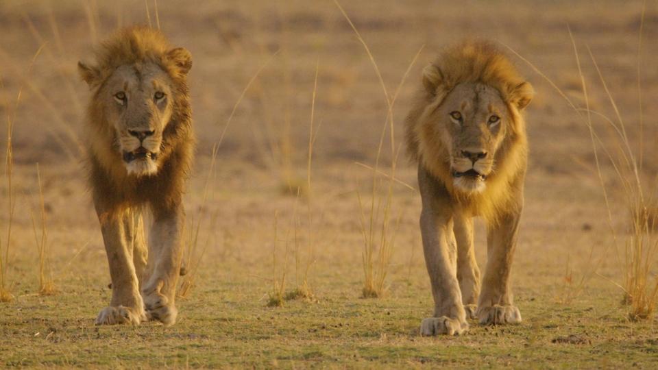 Documentary Afričtí lovci
