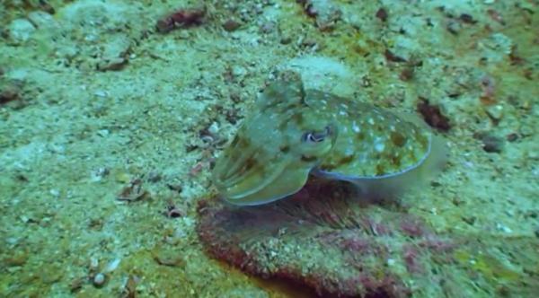 Świat Ryb - Mowa Barw