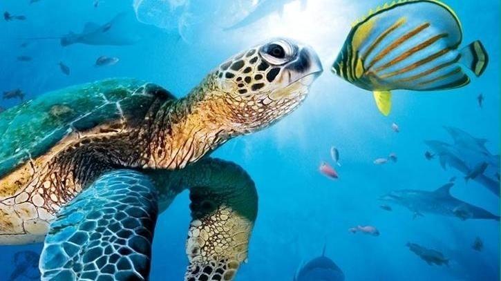 Dokument Velké podmořské dobrodružství
