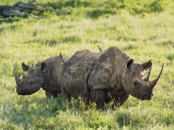 Deníky keňského života v divočině (1)