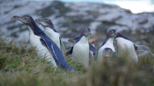 Záchranáři divokých zvířat: Nový Zéland