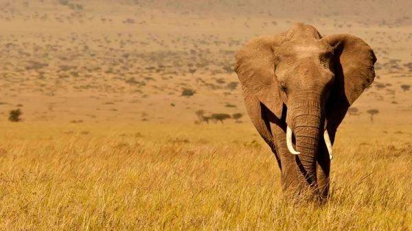 Deníky keňského života v divočině