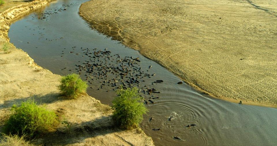 Dokument Divočina Afriky kolem řek