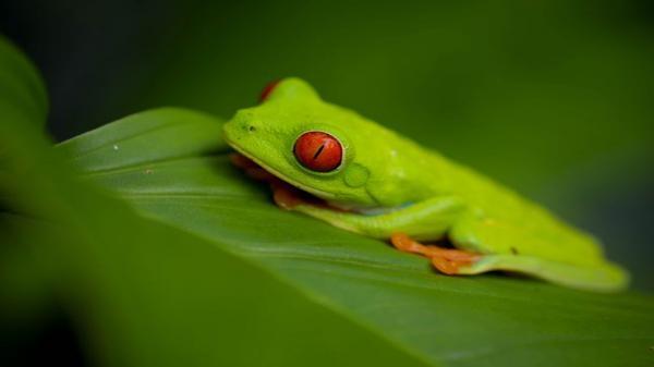 Kostarika, země harmonie