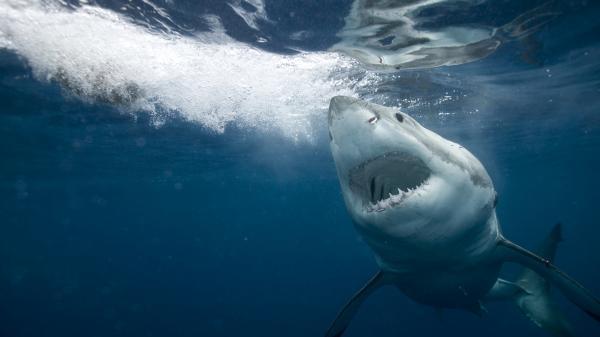 Podivní žraloci: Největší hity