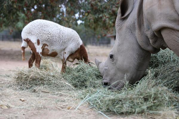 Neuvěřitelná přátelství v říši zvířat